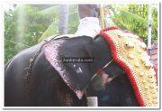 Haripad utsavam pakalpooram photos 7