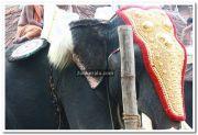 Haripad utsavam pakalpooram photos 9