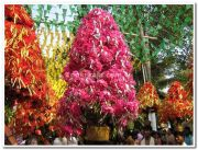 Kavadi closer view