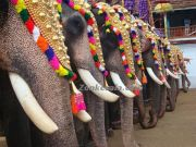 Thripunithura decorated elephants