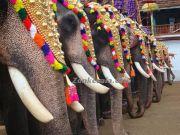 Thripunithura decorated elephants