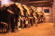 Elephants for vrischikotsavam tripunithura temple 4 881
