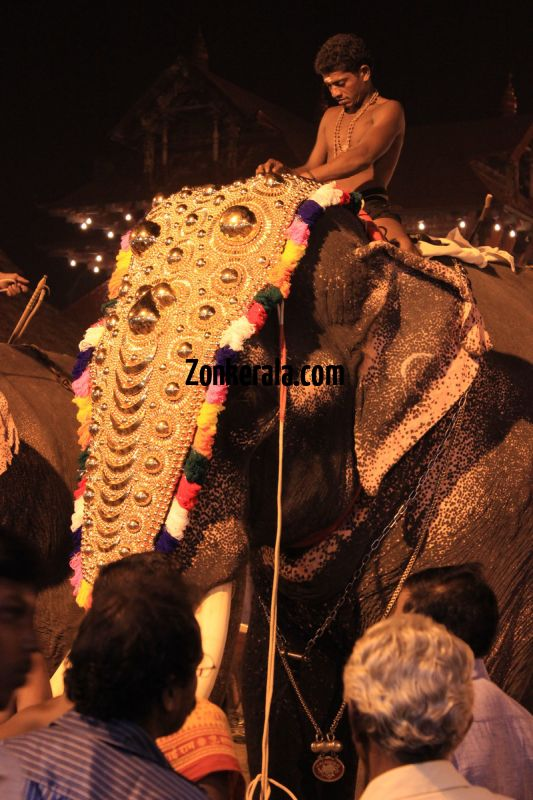 Elephants for vrischikotsavam tripunithura temple 7 944