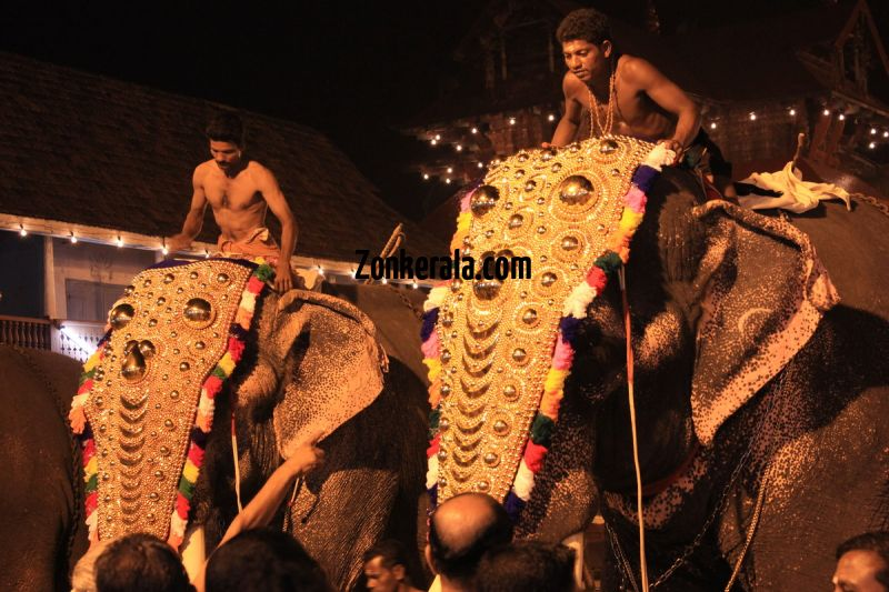 Elephants for vrischikotsavam tripunithura3 11