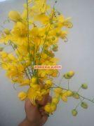 Kanikonna flower for vishu 1