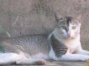 Cat 002