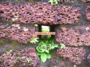 Bekal fort kasargod photo 4