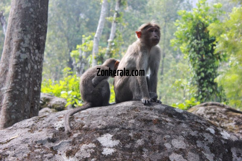 Monkeys at edakkal caves wayanad 943