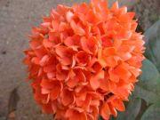 Flowers 1749