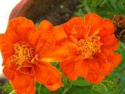 Flowers 1753
