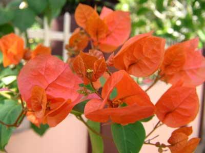 Flowers 1755