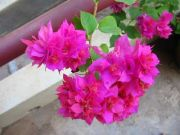 Flowers 1765