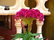 Flowers 1766