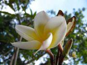 Flowers 1791
