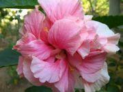 Shoe flower 1746