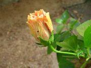 Shoe flower 2719