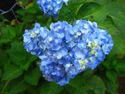 Flowers 1767