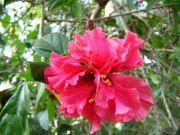 Shoe flower 1745