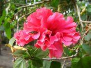 Shoe flower 2721