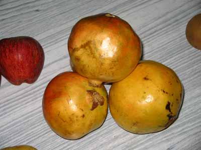 Pomegranate 2959