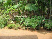 Garden in a kerala home