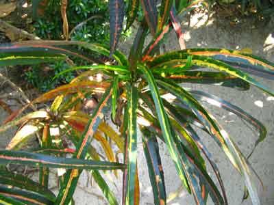 Plant 1752