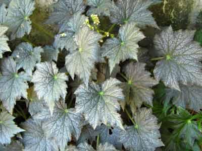 Plant 1753