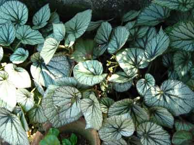 Plant 1754