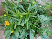 Plant 1755
