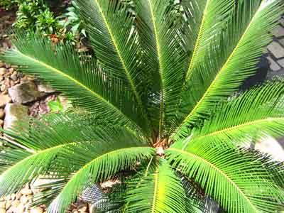 Plant 1756