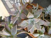 Plant 1758