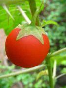 Plant 1760