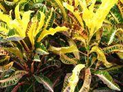 Plant 1761
