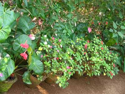 Plant 1767