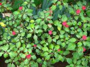 Plant 1768