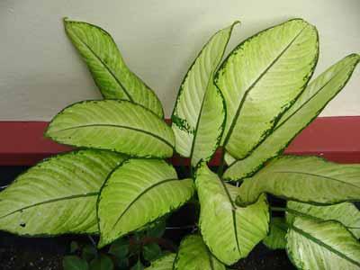 Plant 1771