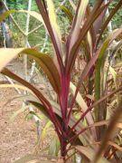 Plant 1774