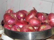 Onion 0627