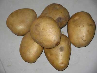 Potato 3232