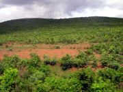 Green hill 6656
