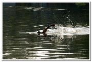 Man swims in backwaters 1