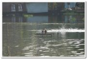 Man swims in backwaters 3
