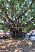 Alappuzha railway station picture2