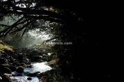 Jungle scenary