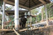 Konni aana koodu elephant 774