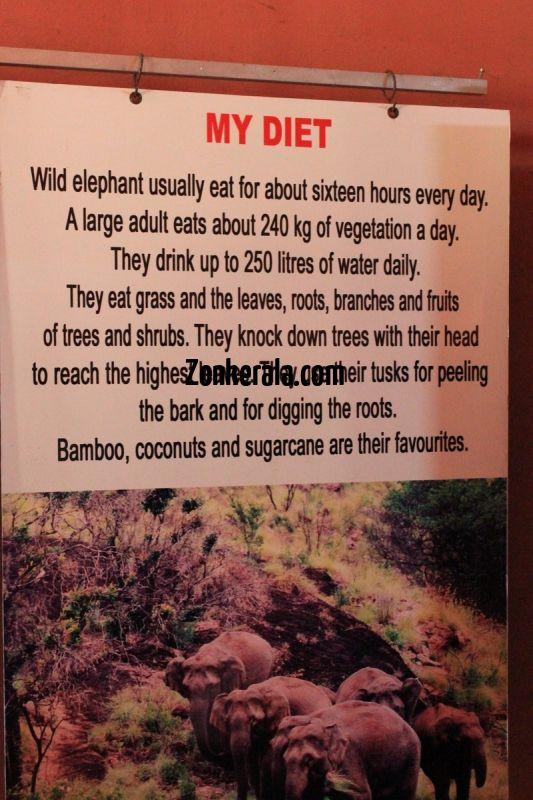 Konni aana koodu elephant diet 607