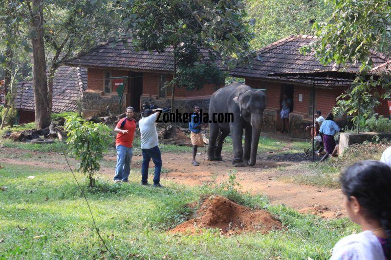 Konni aana koodu elephant with mahouts 188