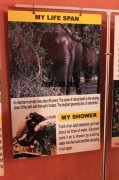Konni elephant museum details of elephant life span 818