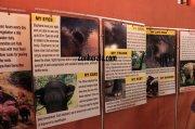 Konni elephant museum photo 483
