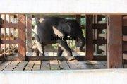 Small elephant at konni aanakkoodu 740